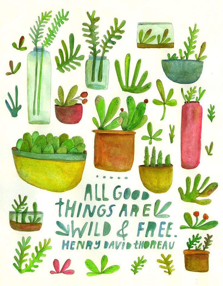 All Good Things Terrariums & Succulents // Lisa Congdon, 2014 // print for sale: https://www.etsy.com/listing/222328112/lisa-congdon-all-good-things-11x14-art?ref=shop_home_active_22