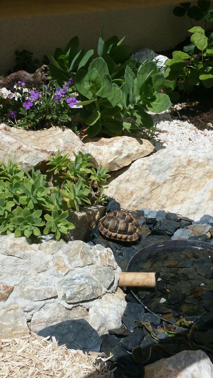 Petite tortue grecque