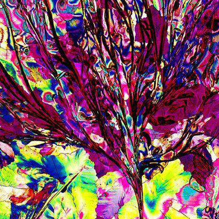 dry martini visto no microscópio  http://catracalivre.folha.uol.com.br/2012/06/qual-e-a-cor-da-sede/