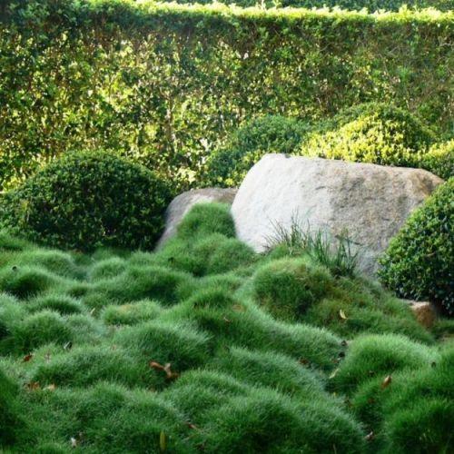 landscaping  no mow bumpy grass  zoysia tenuifolia