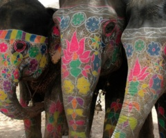 These elephants are my inspiration.