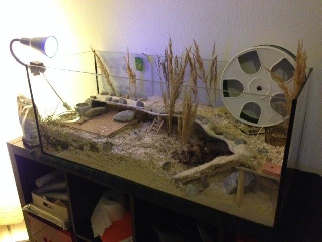 Lovely aquarium natural cage setup for hamsters. Love the tall grasses and use of pebbles.