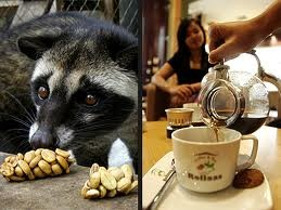 """civet(luwak), animal that can make the nicest coffee, also known as """"alamid"""" in the Philippine Islands"""