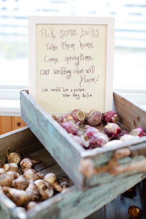 Bulbs is a natural favor option for spring nuptials. Spring #weddingfavors  #springwedding #DIY