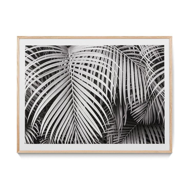 Palms Black & White Print - Wall Art
