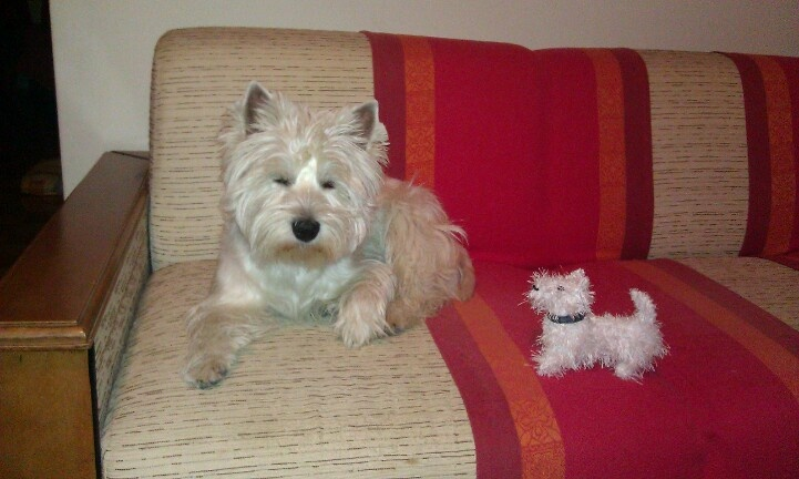 Knitting Pattern For Westie Dog : The 32 best images about Westie knit on Pinterest Toys ...