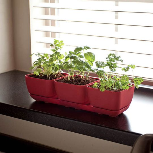 Apartment therapy, indoor garden:    Shown above from left to right:  1. Simple Garden Jr. Trio, $15.00 from A + R (Organic!)  2. Stewart Self Watering Herb Pot - Lime Green, £14.81 from Stewart Garden  3. Culinary Growing Kit, $69.95 from Red Envelope  4. Windowsill Self-Watering Planter - Silver, $34.95 from Windowbox  5. Mini Garden Stacker Planter, $34.95 from Rakuten