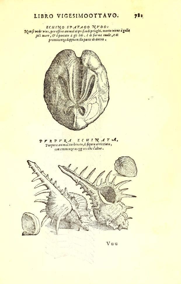 Imperato Ferrante, Dell'historia naturale libri XXVIII nella quale ordinatamente si tratta della diversa condition di miniere e pietre (1599)
