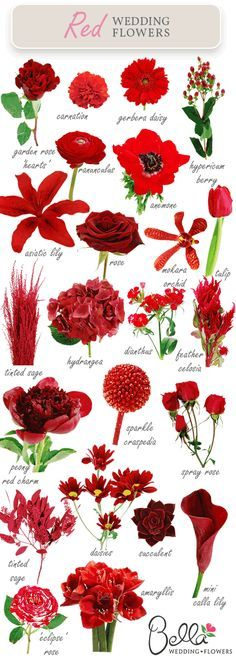 Different types of red flowers pixshark images