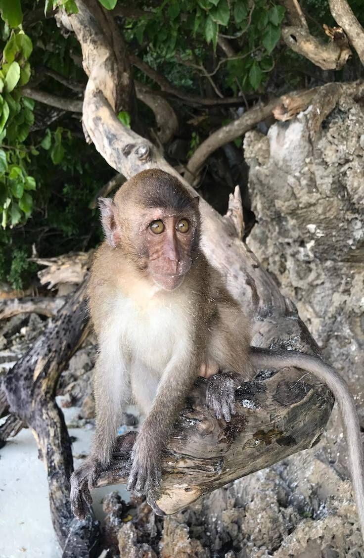 Guide: Monkey Beach, Thailand