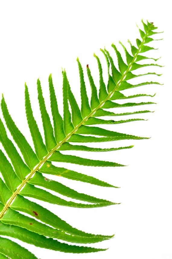 Leather Zip Around Wallet - Ferns on a tree trunk by VIDA VIDA cduAo2z0hf