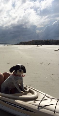 St. Simons Beach After Irma - Thrive Review