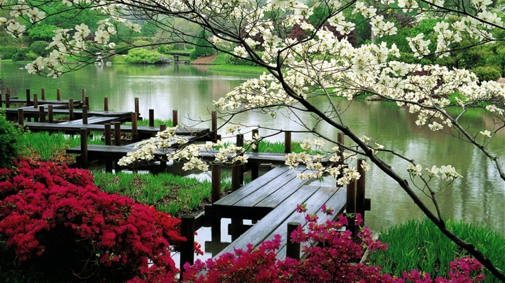 ..........................: Cherries Blossoms, Beautiful, Lakes, Japanese Gardens, St. Louis, Bridges, Japan Gardens, Flower, Botanical Gardens
