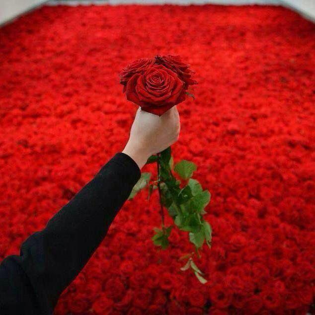 Открытки, анимация картинки миллион алых роз