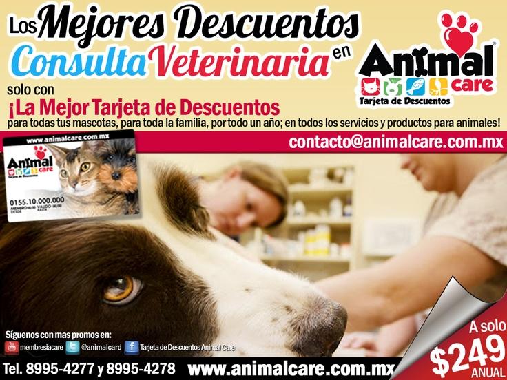 En CONSULTA VETERINARIA al presentar tu TARJETA DE DESCUENTOS ANIMAL CARE obtienes descuentos desde un 10% hasta un 50%. Llámanos al 8995-4277 y 8995-4278 o escríbenos a contacto@animalcare.com.mx