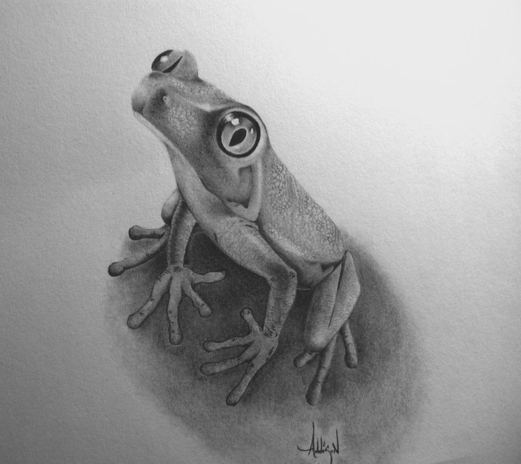 Realistic Tree Frog Drawings Best 25+ Graphi...