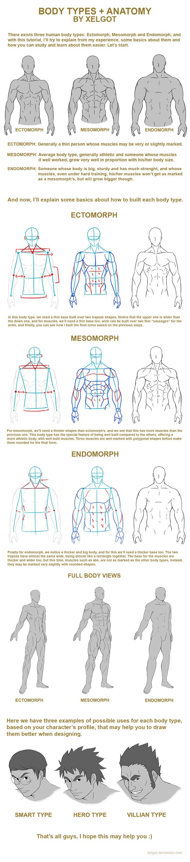 Body types + Anatomy tutorial by Xelgot.deviantart.com on @DeviantArt