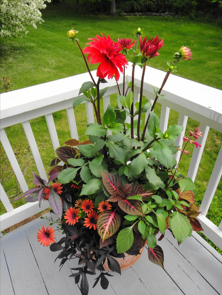 13 best images about perennial on pinterest gardens window boxes and sun - Container gardens for sun ...