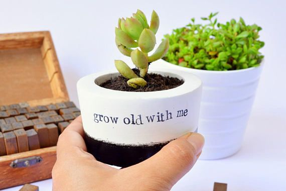 Succulent Cactus Planter Pot Vase grow old with