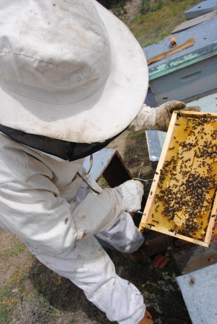Cuadro con puesta, abejas trabajando.