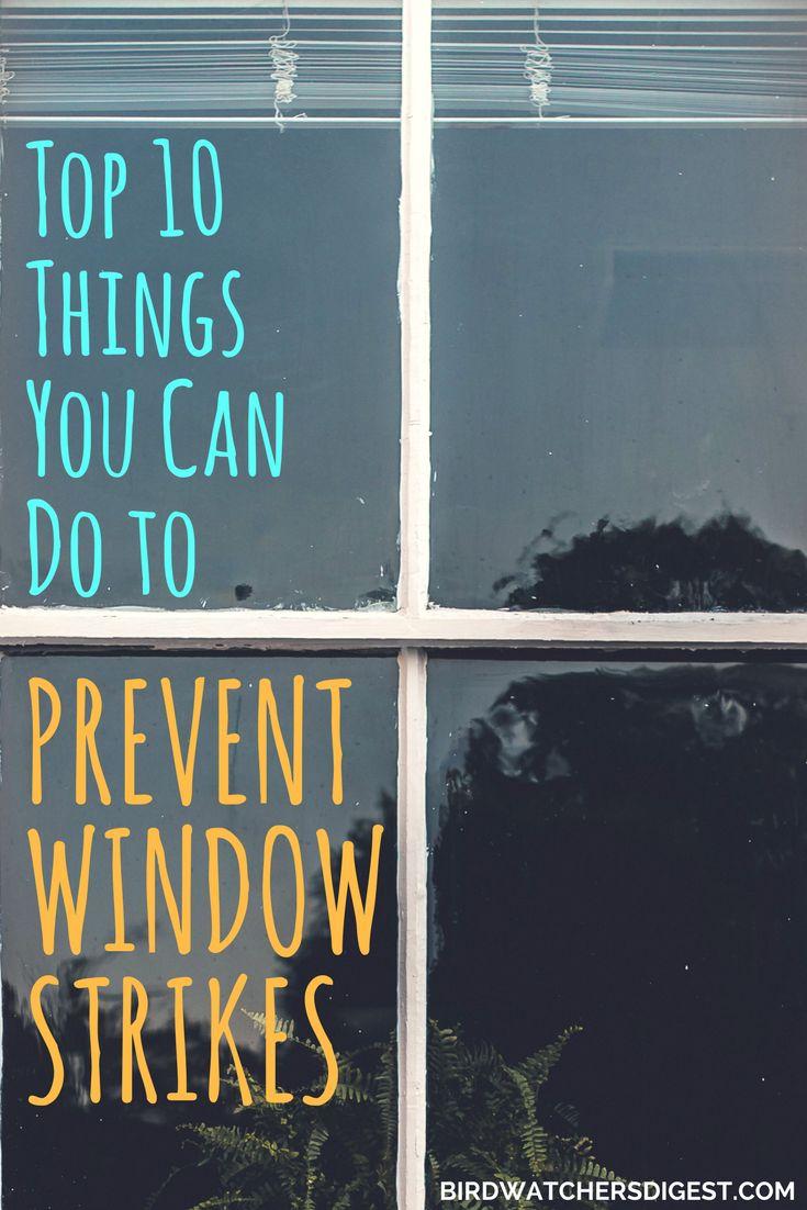 best 25 birds flying into windows ideas on pinterest