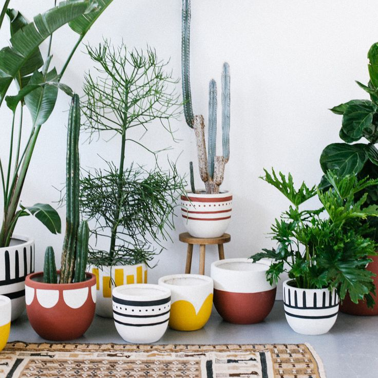 570 best Plants :: Indoor, Hanging & DIY Pots images on Pinterest ...
