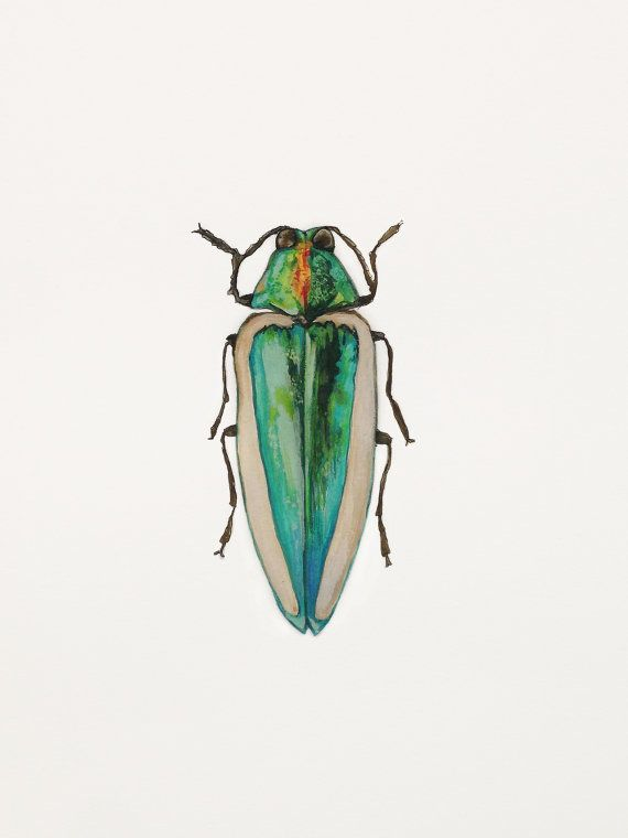 watercolor jewel beetle - Google Search