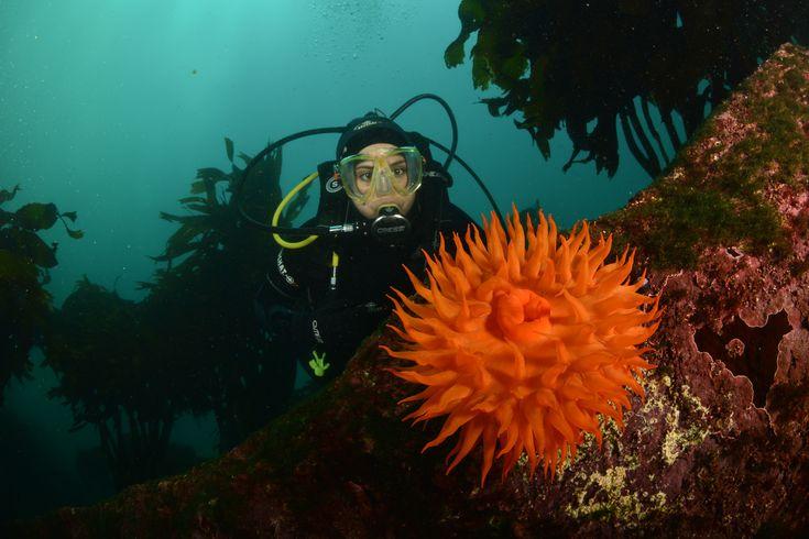Fotografía Submarina En Pichidangui