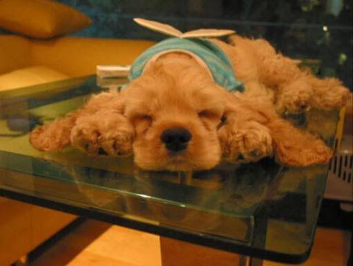 sleep (dormir)