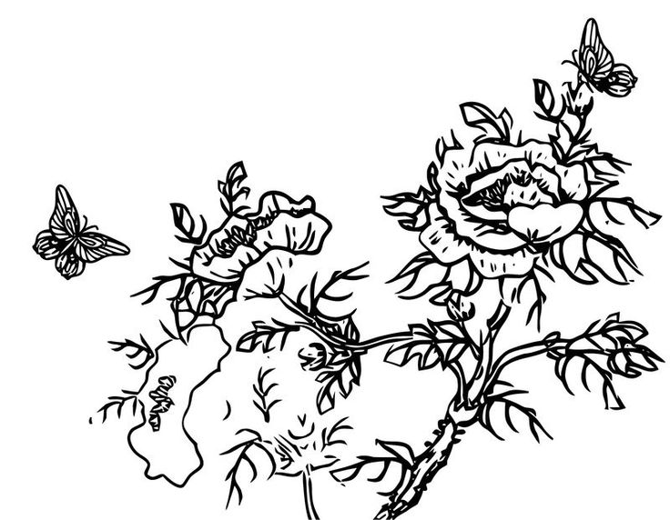 Butterfly Flowers Branch Coloring Page   Flower branch ...