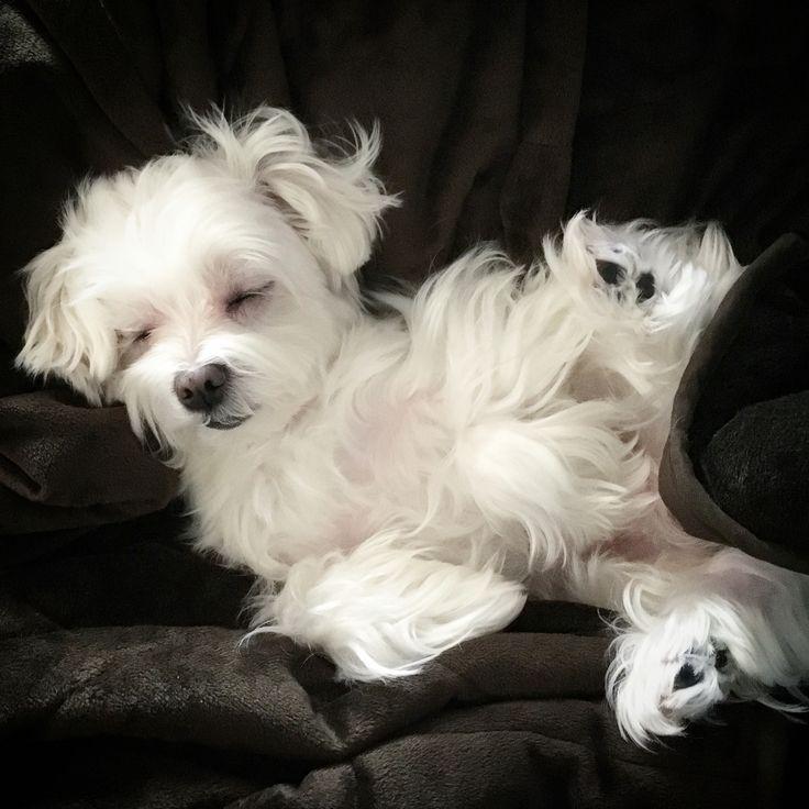Please do not ring the bell!!! #sleepingangel #sleep #puppylove #arodwang…