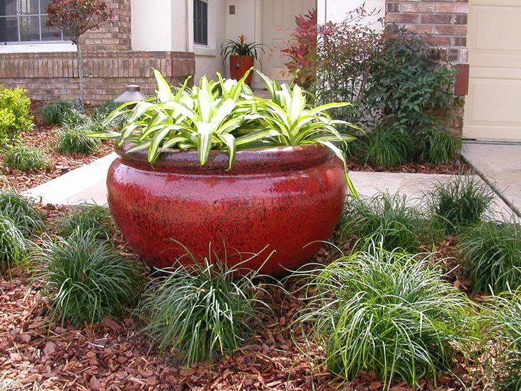 Pin by kaylee walker on florida landscaping pinterest for Landscaping shrubs