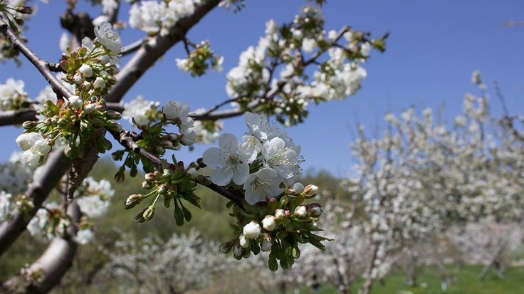 Feel the nature and the spring in a Trigiro hike or bike tour. #trigiro #tours #Greece #feel #nature #spring