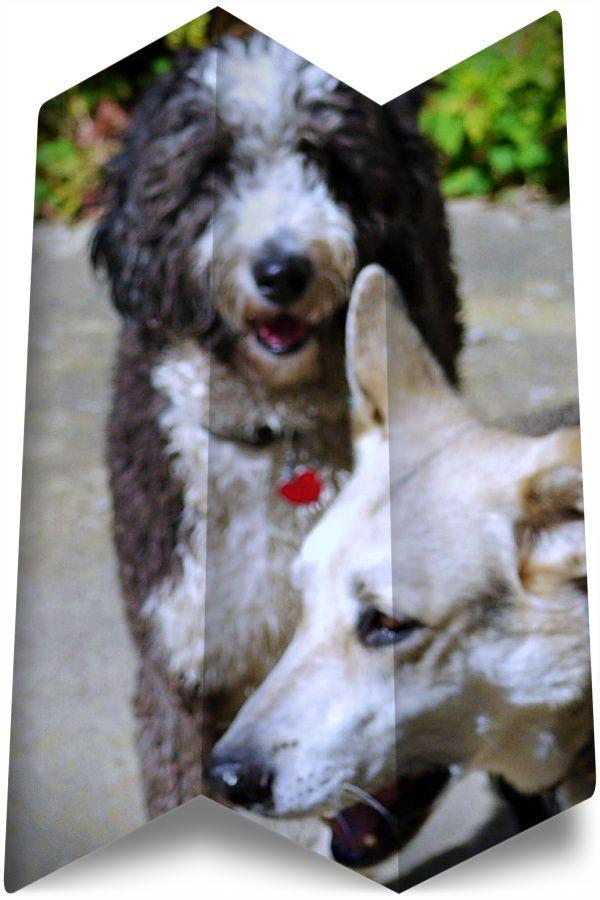 Take A Look At German Shepherd Rescue Wisconsin White German