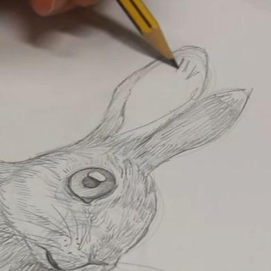 orejas de conejo 3