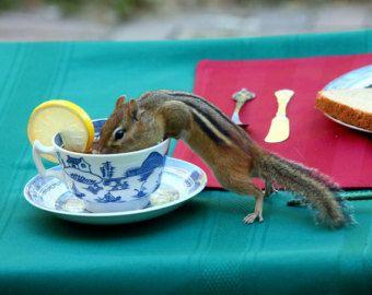 Best Chipmunks Images On Pinterest Chipmunks Squirrels And - Adorable chipmunks go on playful adventures with lego star wars toys