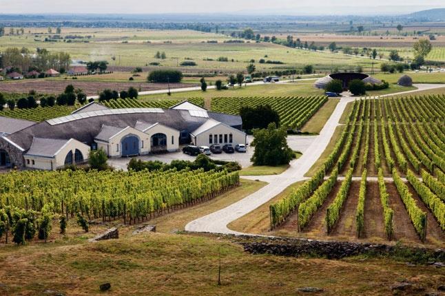 Disznókő vineyard at Tokaj. Photo by Tim Clinch.