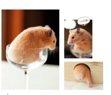 Best Hamster Images On Pinterest Annoying Things Beautiful - Hamster bartenders cutest thing youve ever seen