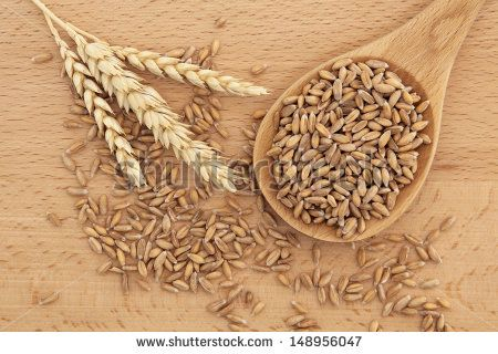 Spelt wheat in a wooden spoon over beech wood background. - stock photo