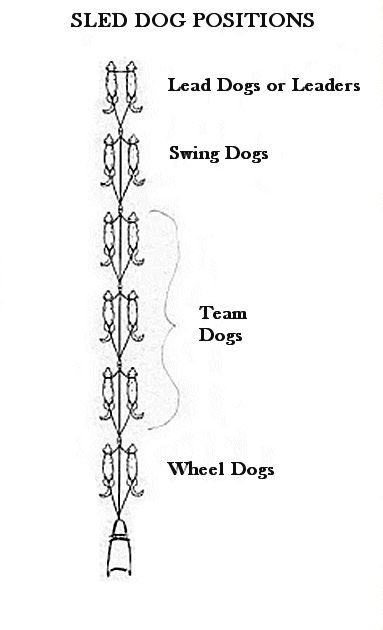 Sled Positions of Dogs Marley Jane is lead dog singular