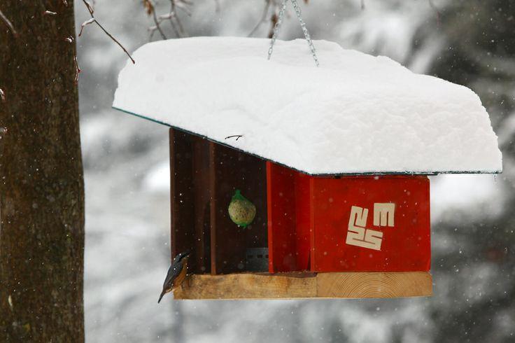 In prav splačalo se je, ker nenadoma mrgoli lačnih in premraženih ptičic po Tivoliju. / And we were right - suddenly there are a lot of birds in Tivoli hungry and shivering with cold.