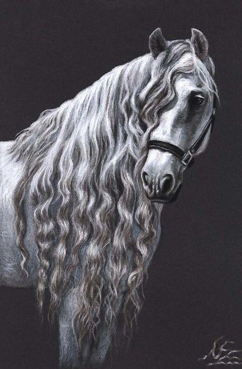 Andalusier Pferd - Fine Art Print A4 Pferde Zeichnung Kunstdruck