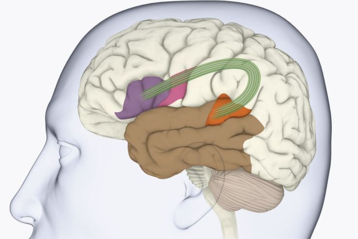 Broca's area is one of the main areas of the cerebral cortex responsible for producing language. It controls motor functions involved with speech.