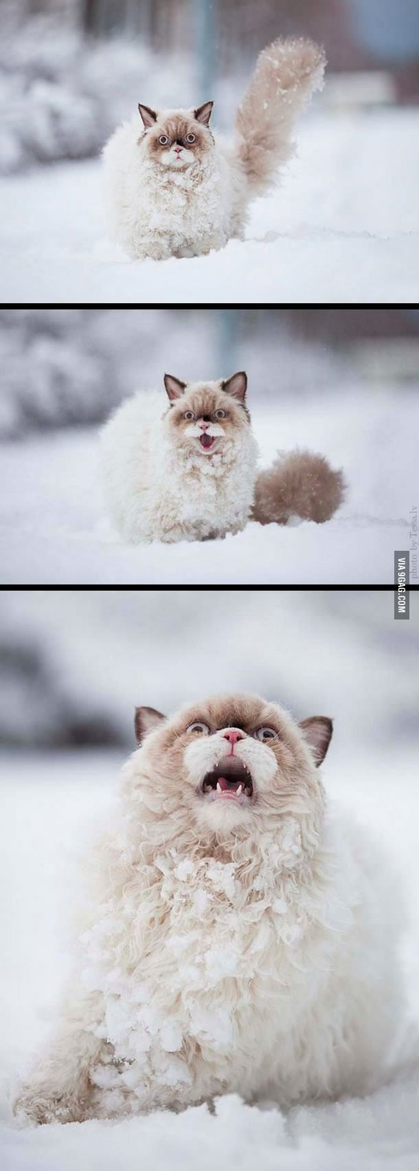 Cat sees snow for the first time.