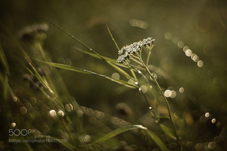 Дождливые дни by OlkaMaska