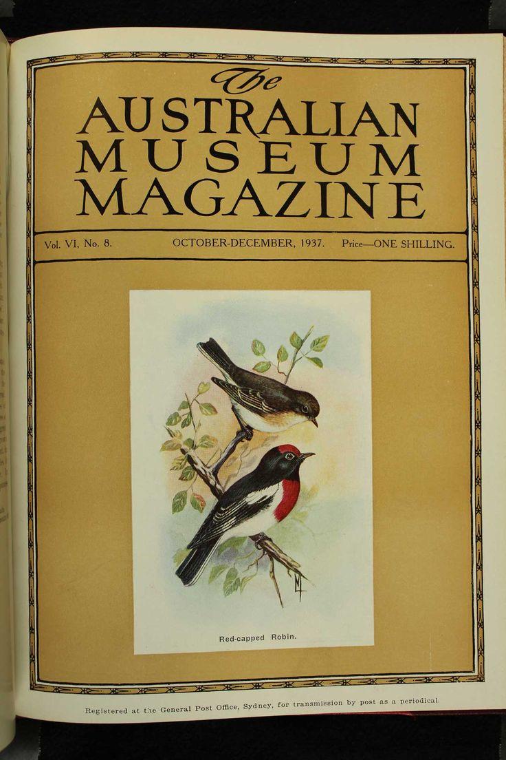 Australian-Museum-Magazine. The Redcapped Robin. Illustrator: Lilian Medland. http://australianmuseum.net.au/Australian-Museum-Magazine-1921-1942/