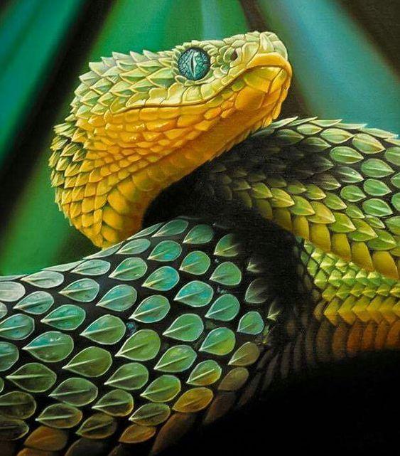 картинки рисунки фото змей пользоваться как правильно