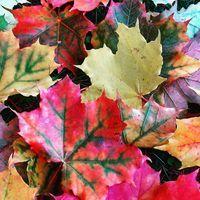 #autumn #mountains #fallenmaple #czech #vyletip