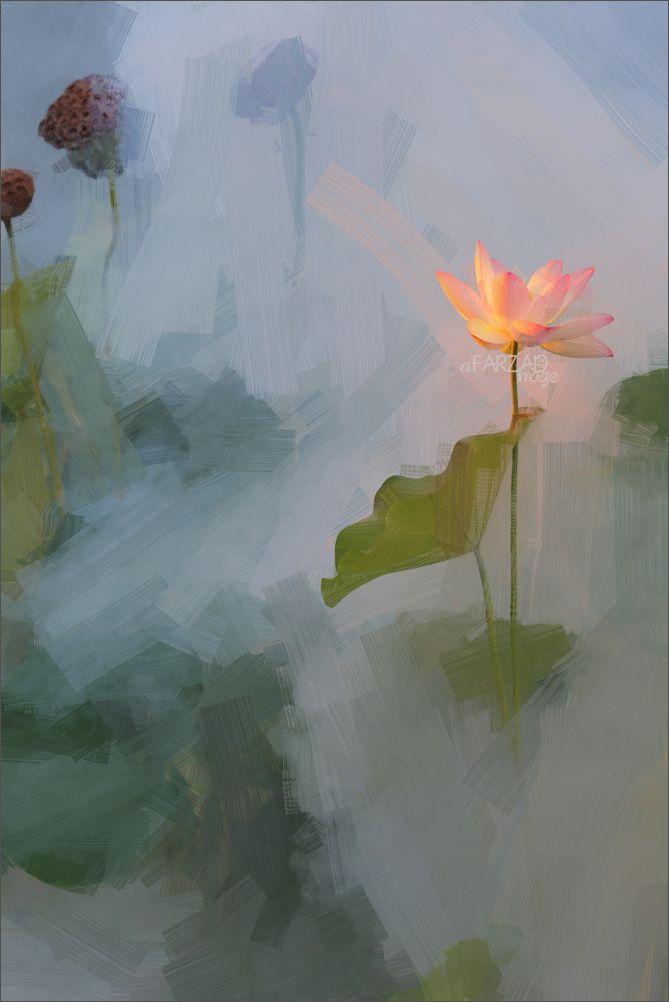 https://flic.kr/p/rb3CAd | Lotus Flower Oil Paintings / Lotus flower oil Painting / Photographic images using Akvis Oil Paint Filter - DD0A2958-ls14-1000s | Lotus Flower Paintings - Image Based - Akvis Oil Paint Filter - akvis.com/en/oilpaint/index.php