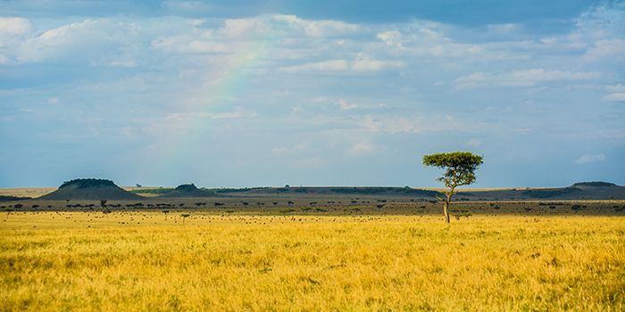 Where to go on your first Safari